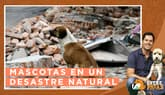 Entre Patas: ¿Cómo actuar con tu mascota frente a un desastre natural?