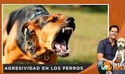 ¿Cómo controlar la agresividad en los perros? - Entre patas