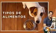 Entre Patas: Tipos de comida para perros y cuál es el ideal para tu mascota