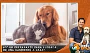 ¿Cómo prepararte para llegada de una cachorro a casa? | Entre Patas