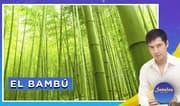 Señales con Jhan Sandoval: El significado del bambú