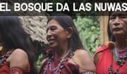Domingo Semanal: El bosque de las Nuwas
